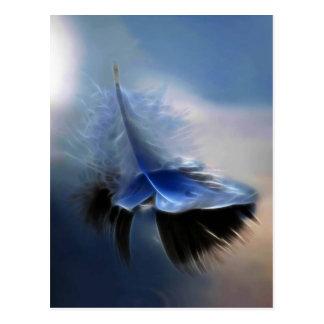White feather sailing postcard