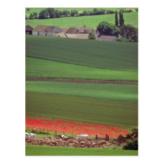 White Field of poppies in a provencal landscape ne Postcard