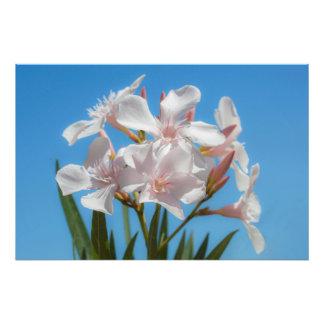 White Flora Photo Print