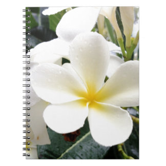 White Floral Notebooks