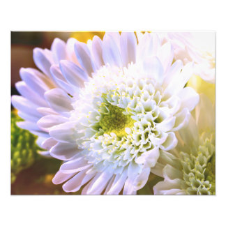 White Flower Alt Photo Print