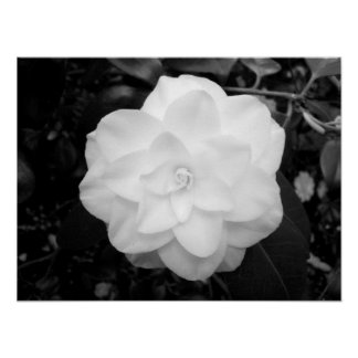 White Flower. (Black and White) Posters