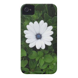 White Flower Blackberry case