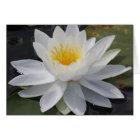 White Flower - Blank Card
