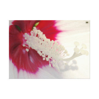 White Flower Blossom Photo Single Print