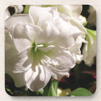 White Flower Drink Coasters