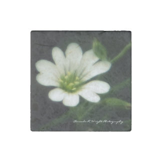 White flower Magnet