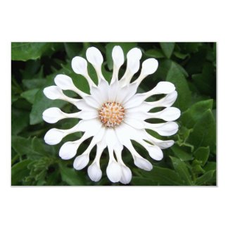 """White Flower Personalized Blank Notecard 3.5"""" X 5"""" Invitation Card"""