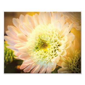 White Flower Photo Art