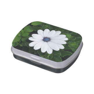 White Flower tins & jars Jelly Belly Tin