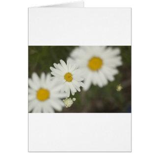 White Floweres Greeting Card