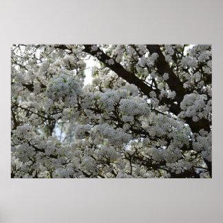 White Flowering Tree Posters