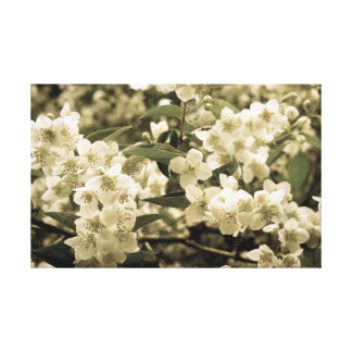 white flowers aged7 canvas print