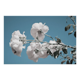 White Flowers and Blue Sky Poster