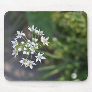 White Flowers Delicate Floral Blossom Nature Photo Mouse Pad