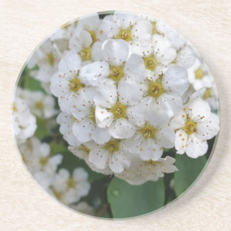 White flowers glowing coaster