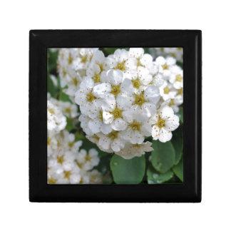 White flowers glowing gift box