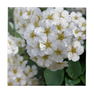 White flowers glowing small square tile