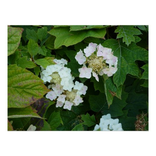 White Flowers, Green Leaves Posters