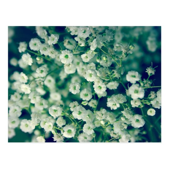 White flowers postcard