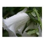White flowers postcard, Auckland Wintergarden