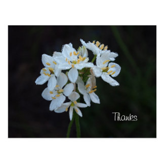 White Flowers thank you card