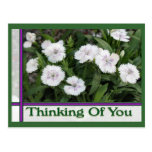 white flowers thinking of you post card