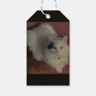 White fluffy cute cat