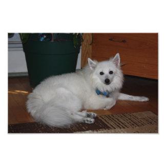 White Fluffy Dog Photo Art