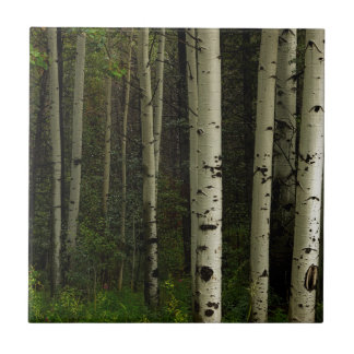 White Forest Ceramic Tile