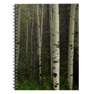 White Forest Notebooks