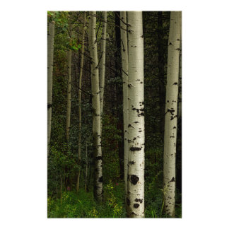 White Forest Stationery