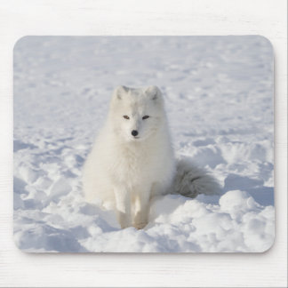 White fox mouse pad