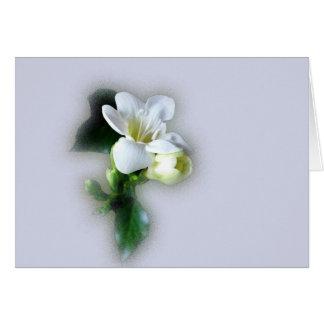 white freesia flower card