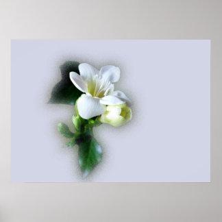 white freesia flower poster