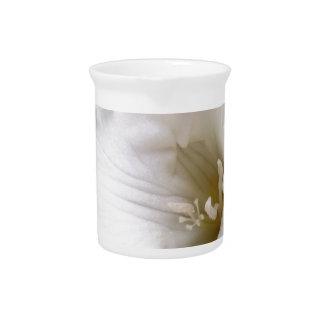 white freesia pitcher