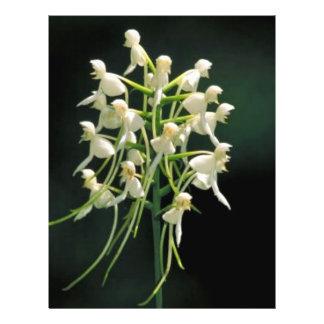 White fringeless orchid flyer design