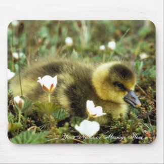White-fronted Goose Gosling Mouse Pad