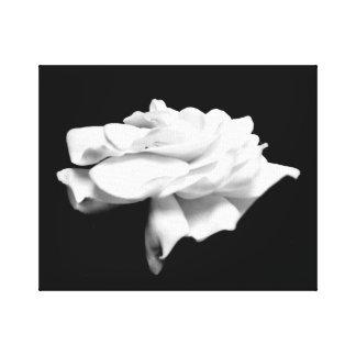 White Garden Black Background Canvas Print
