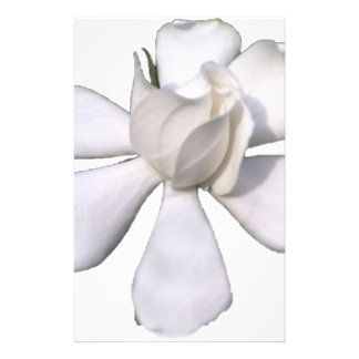 White Gardenia Bud 201711g Stationery