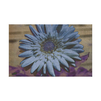 White Gerbera Daisy Canvas Gallery Wrapped Canvas