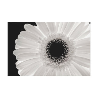 White Gerbera Flower Stretched Canvas Prints