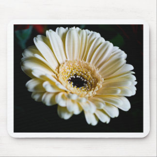 White Gerbera Flower Mouse Pad