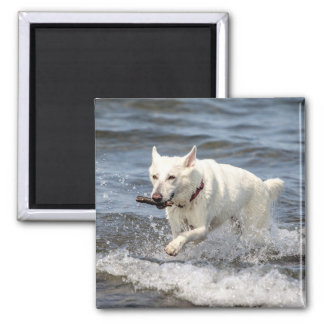 White German Shepard on Lake George Magnet