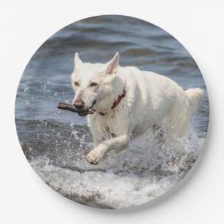 White German Shepard on Lake George Paper Plate