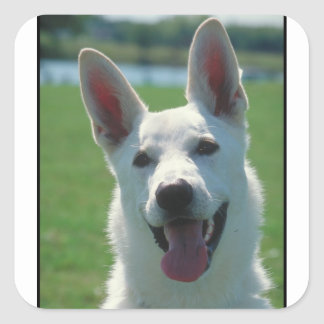White German Shepherd Dog Square Sticker