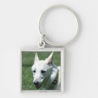 White German Shepherd Key Ring