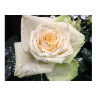 White Glittery Rose Flower Postcard