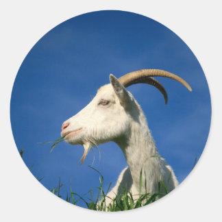 White goat classic round sticker