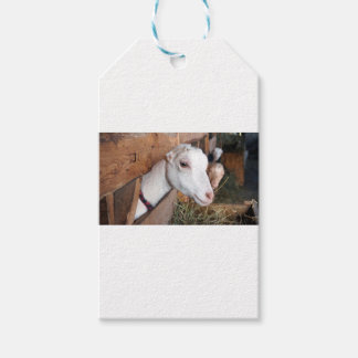 White Goat Gift Tags